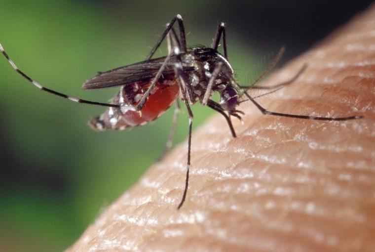 Insektenschutz 2020