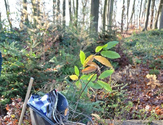 Baumpflanzaktion der E Center Minden und Porta Westfalica 2020